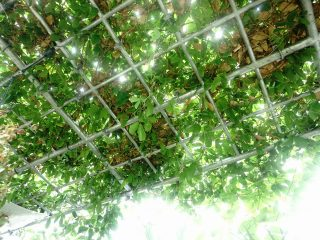 雨天でも楽しめた!アルファ撮影会(江戸東京たてもの園~神代植物公園)