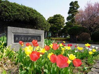 ソニーα7MⅢとGマスターを持って野川公園を撮ってきた