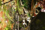 サカタアルファクラブで太田黒公園に紅葉撮影に行ってきました。